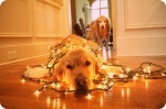 dog-christmas-lights 1