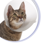 cat with cone