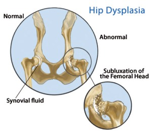 dog-hip-dysplasia