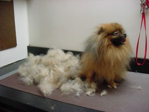 stop-dog-shedding