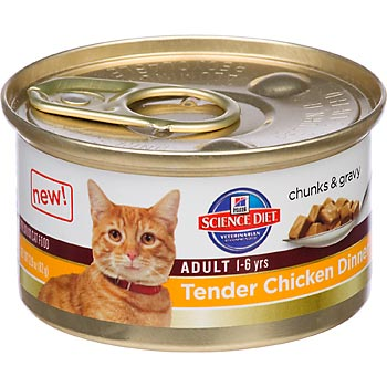 Should Cats Be On A All Wet Food Diet