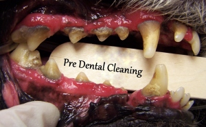 Pre dental cleaning