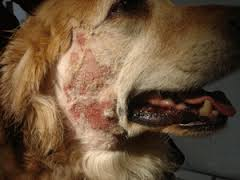 Can Hot Spots Cause Vomiting In Dogs