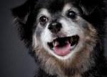 senior dogs