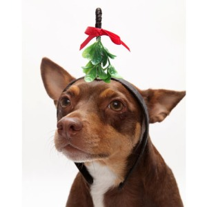 mistletoe_dog