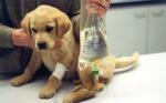 Puppy on Fluids