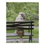 dog_sitting_on_park_bench_print-r2b14576d5d3f4697a191a511d691126d_wvc_8byvr_512