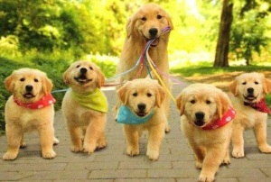 puppies walking
