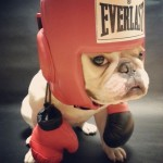 Boxing frenchie